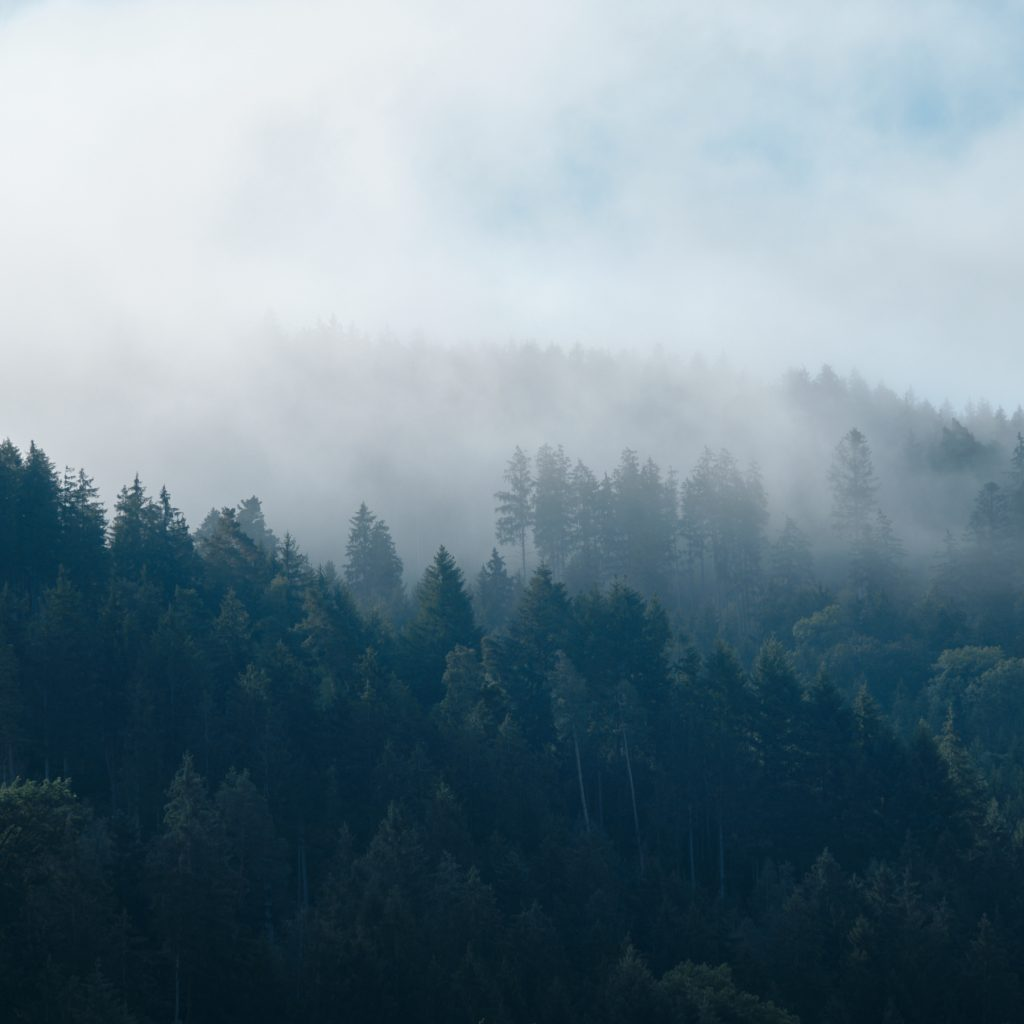 fekete- erdő egyetlen facebook)